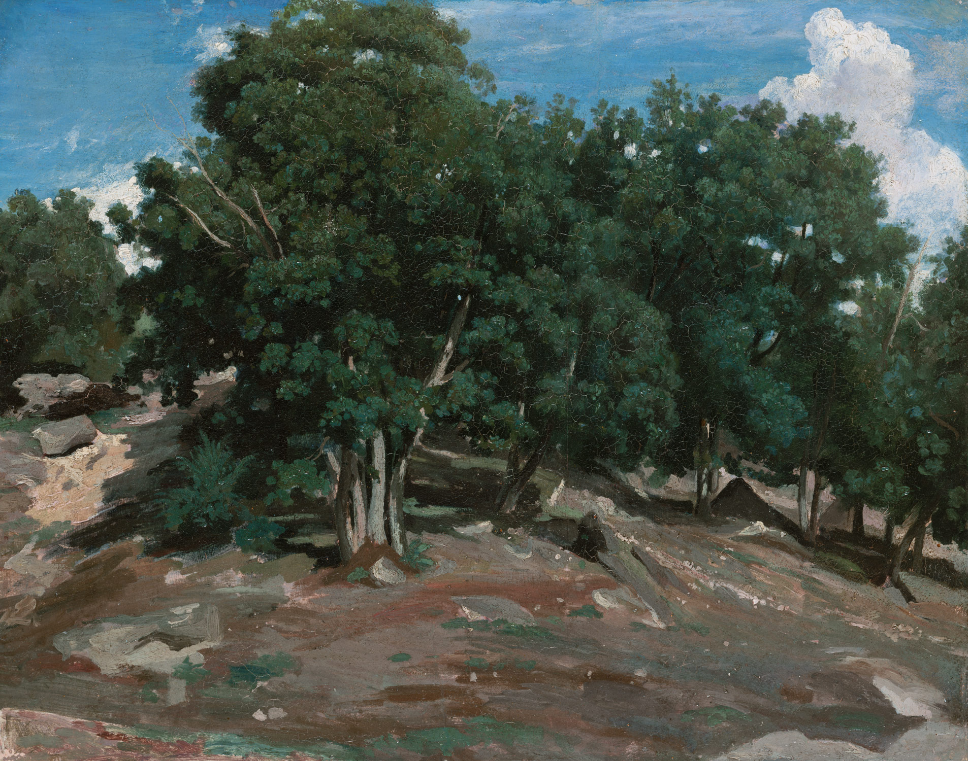 Fontainebleau: Oak Trees at Bas-Bréau