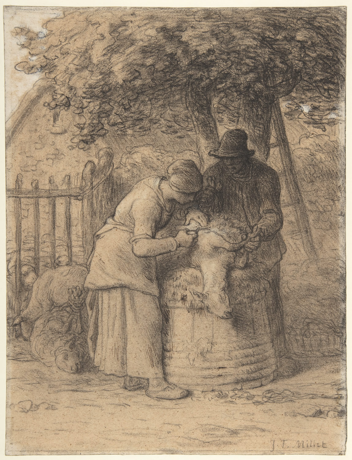 Sheep Shearing Beneath a Tree