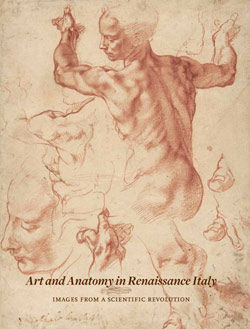 Art and Anatomy in Renaissance Italy Images from a Scientific Revolution adapted from The Metropolitan Museum of Art Bulletin v 69 no 3 Winter 2012