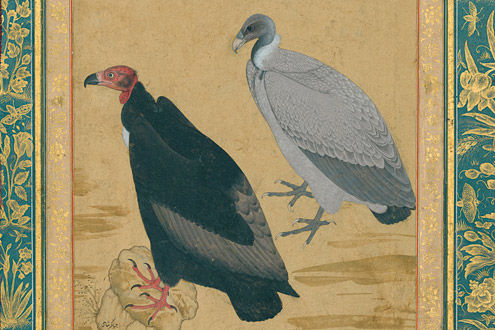 Red-Headed Vulture and Long-Billed Vulture: Folio from the Shah Jahan Album