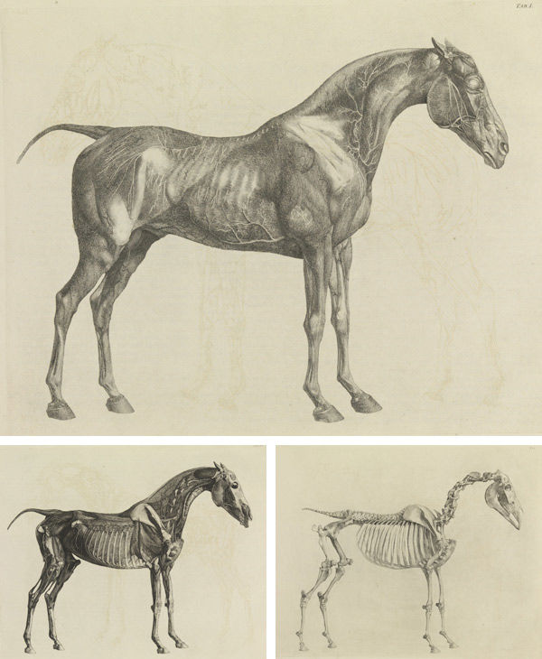 George Stubbs (British, 1724–1806). Three plates from The Anatomy of the Horse, 1766. Plates: etching; 18 1/4 x 23 in. (46.4 x 58.4 cm). The Metropolitan Museum of Art, New York, Gift of Lincoln Kirstein, 1953 (53.599.1bis)