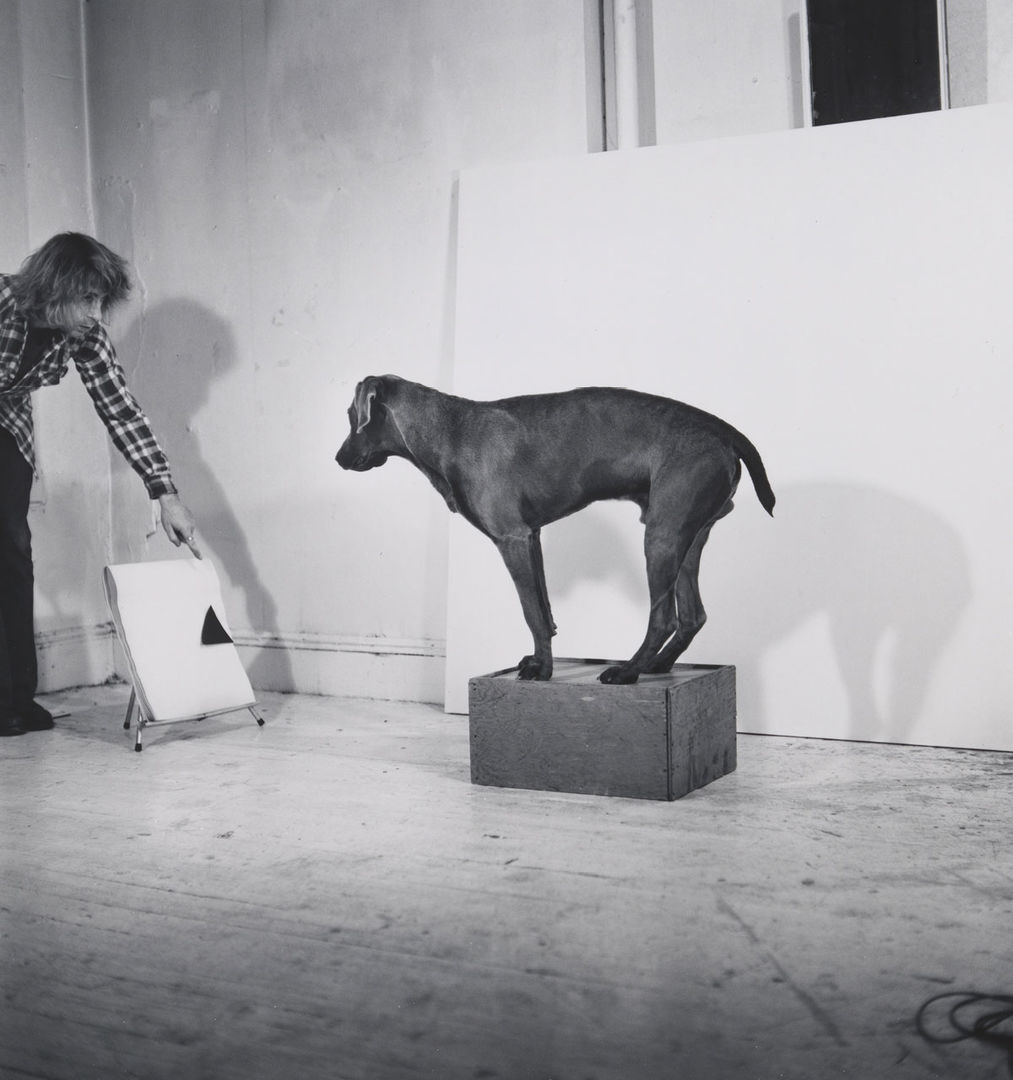 before  on  after  william wegman and california