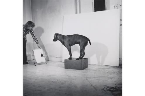 Before/On/After: William Wegman and California Conceptualism
