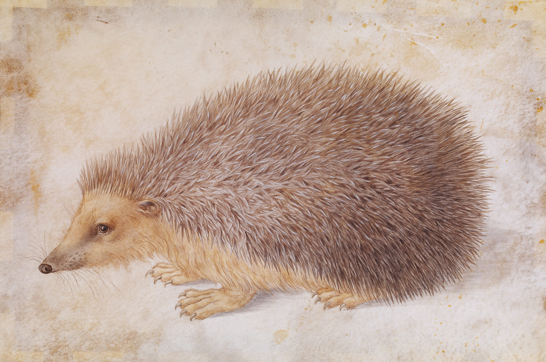 Gallery For gt Durer Animal Drawings
