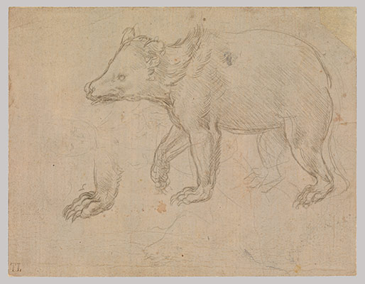 leonardo da vinci essay heilbrunn timeline of art  a bear walking