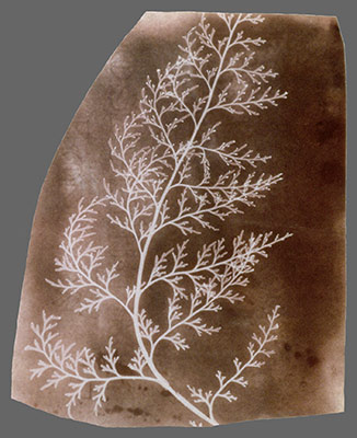 What Fox Talbot Could Have Done With >> William Henry Fox Talbot 1800 1877 And The Invention Of
