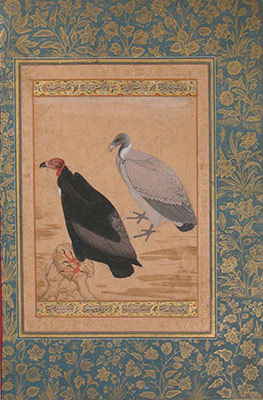 Red-Headed Vulture and Long-Billed Vulture, Folio from the Shah Jahan Album