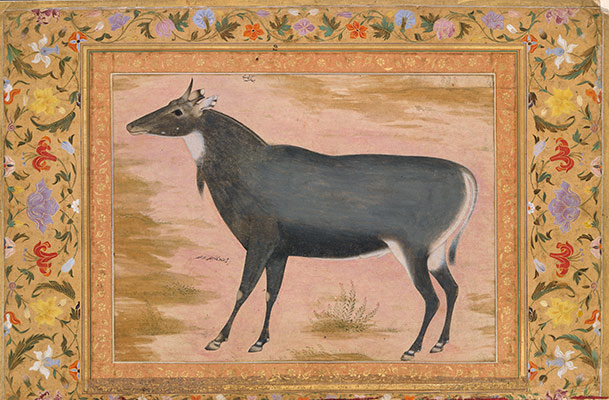 Study of a Nilgai (Blue Bull), Folio from the Shah Jahan Album