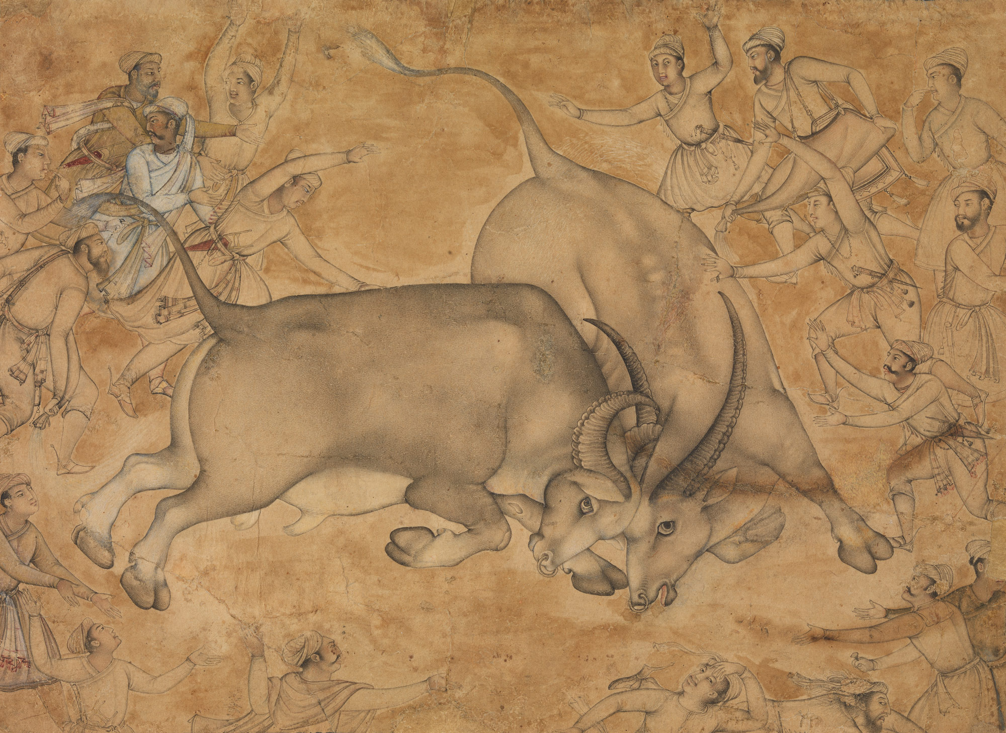 Buffaloes in Combat