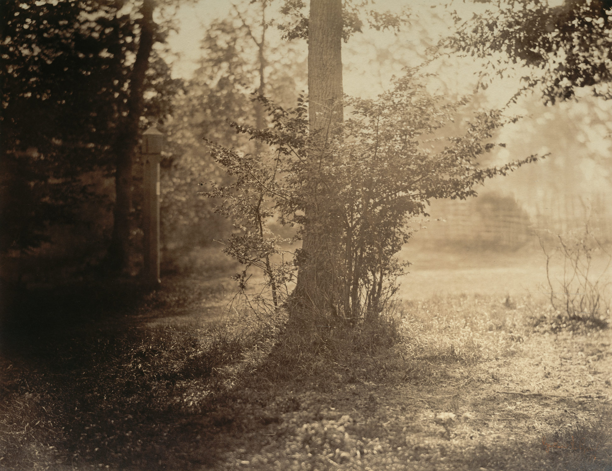 [Tree Study, Forest of Fontainebleau]