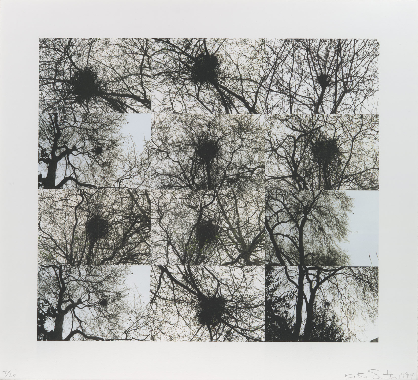 Untitled (Nest/Trees)