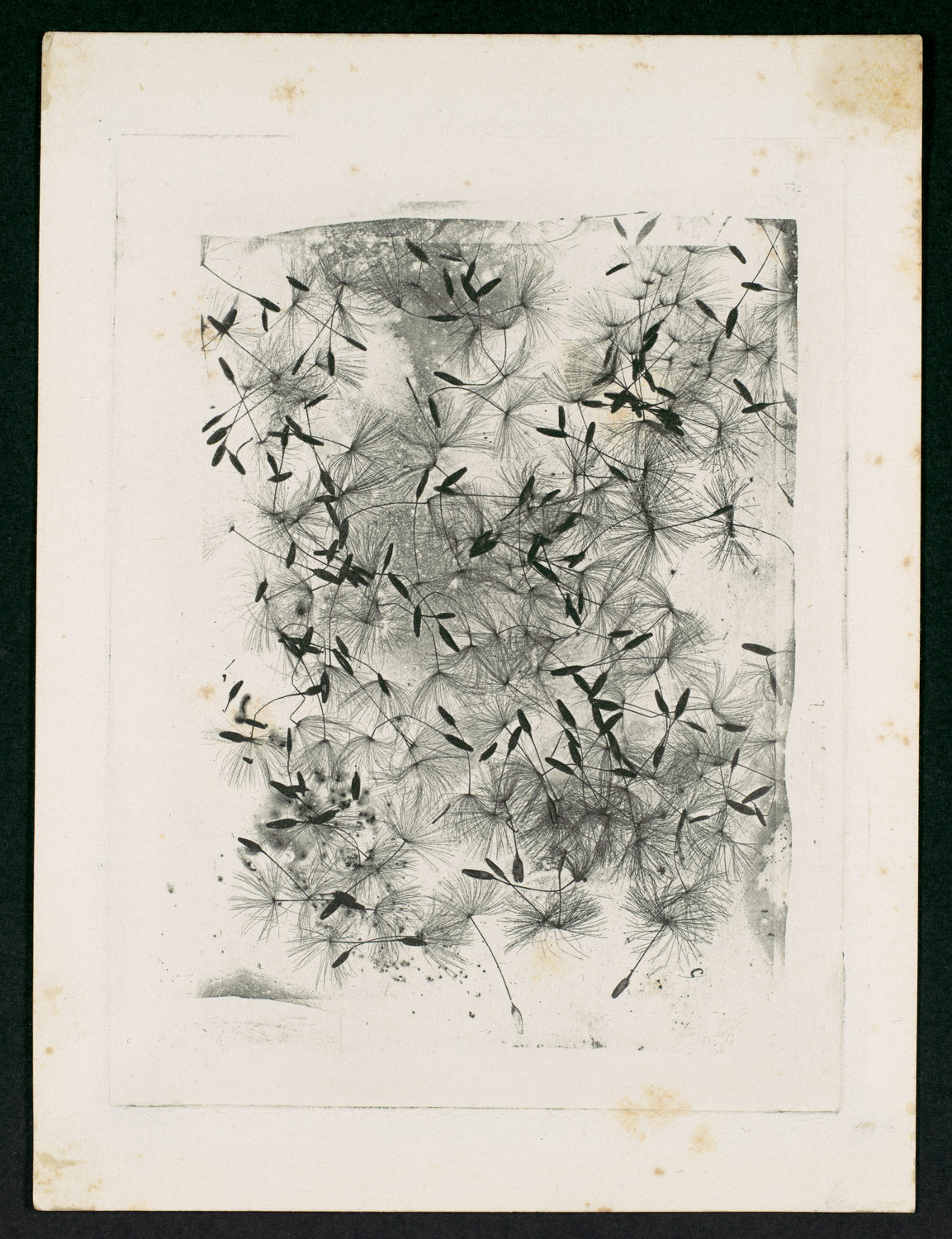 What Fox Talbot Could Have Done With >> Dandelion Seeds William Henry Fox Talbot 2004 111 Work Of Art