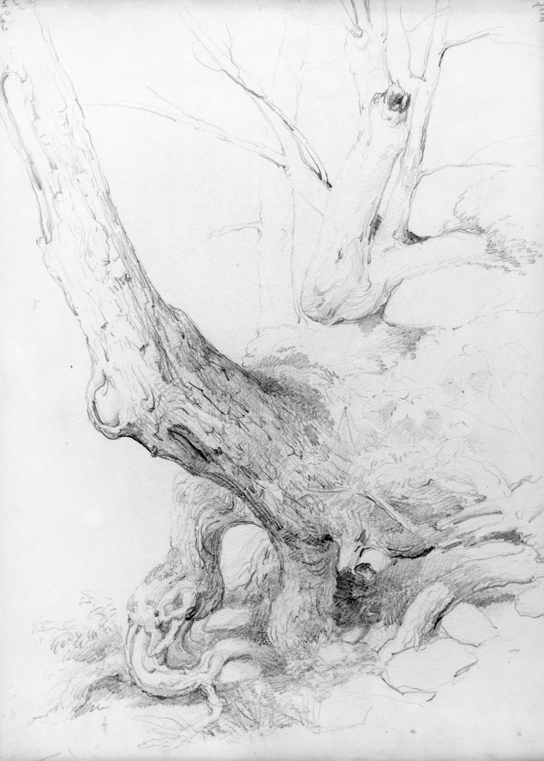 Sketch from nature