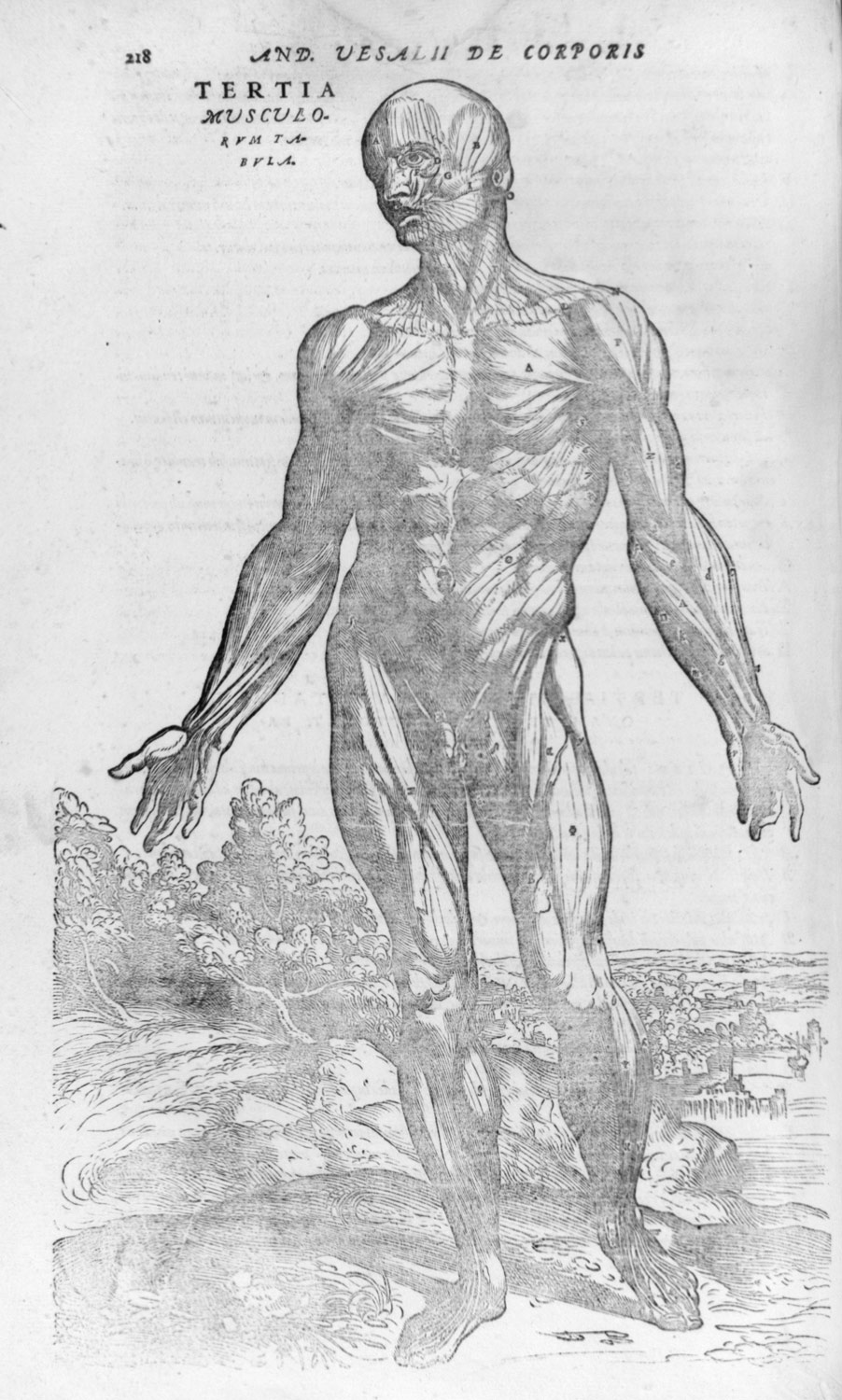 De Humani Corporis Fabrica Of The Structure Of The Human Body