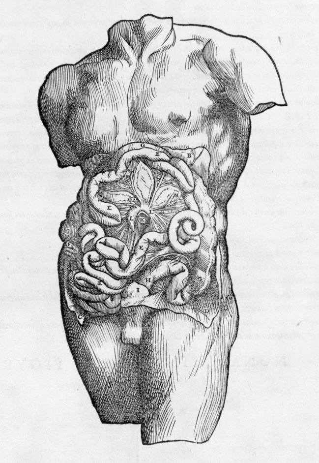 De Humani Corporis Fabrica Of The Structure Of The Human Body