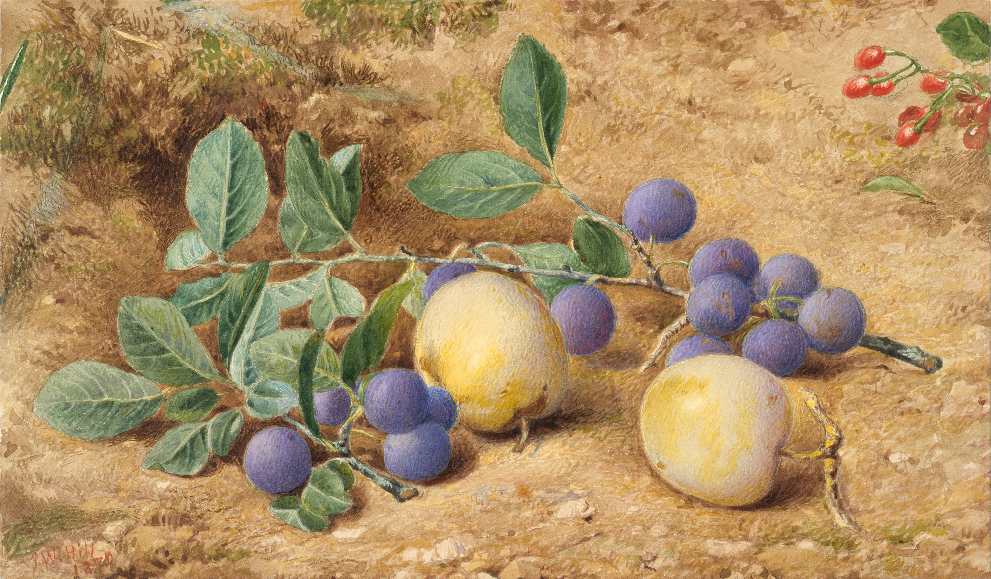 Plums | John William Hill | 82 9 1 | Work of Art | Heilbrunn