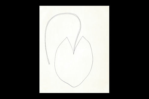Ellsworth Kelly Plant Drawings